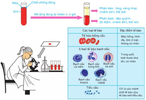 Figure 13.1 Experiment to understand the composition of blood
