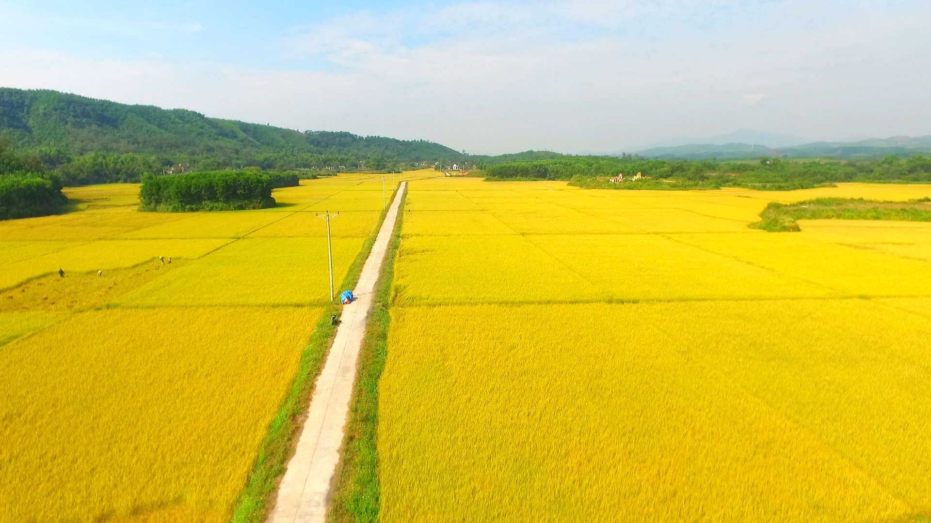 Maintaining the ecology of wet rice agriculture