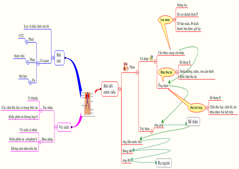 Mind map of knowledge content chapter 7