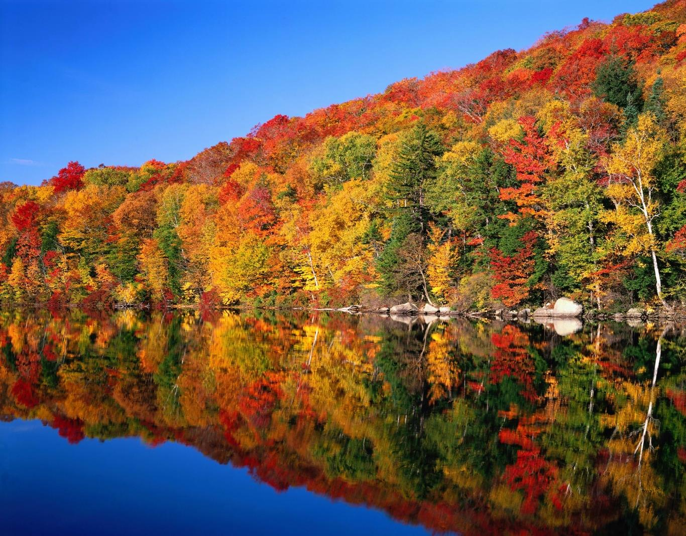 Leaf color in cold areas changes with temperature